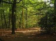 Brown's Wood, Beaconsfield
