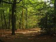 Brown's Wood, Beaconsfield