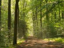 Common Wood, Penn