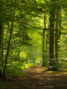 Dog walking in Common Wood, Penn
