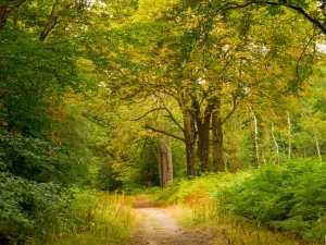 Egypt Woods, Burnham
