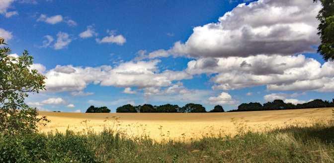 Greensand Ridge, Clophill, Bedfordshire