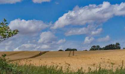 Greensands Ridge in July