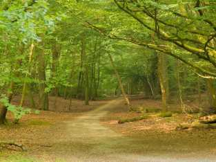Halse Drive, Burnham Beeches
