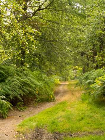 Heathfield Wood, near Egypt, Buckinghamshire