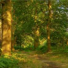 Mad Bess Woods, evening light