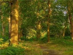 Mad Bess Woods, evening light