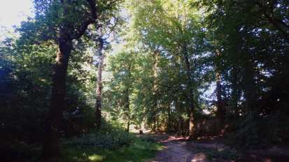 Woodland shadows, Ruislip Woods