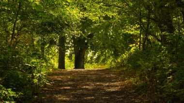Common Wood, Streatley