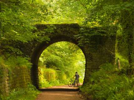 Cycle paths, Forest of Dean