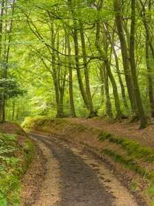 Hollandridge Lane