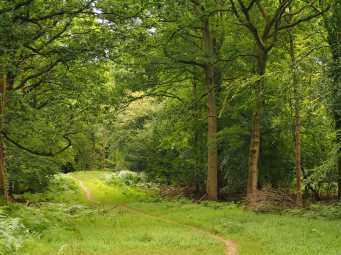 Summer walks in the Forest of Dean