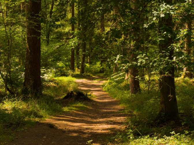 Summer in the Forest of Dean