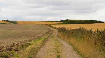 Swan's Way, Ewelme Downs
