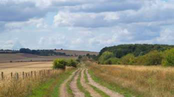 The Fair Mile & Lowbury Hill
