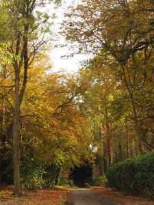 Autumn colours and Quiet Lanes, Checkendon