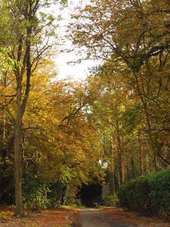 Autumn colours and Quiet Lanes, Checkendon