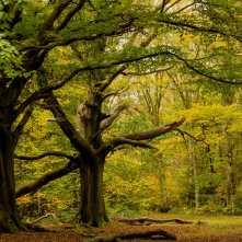 Autumn in Hertfordshire