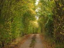 Autumn lanes in Hertfordshire