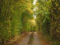 Autumn lanes in Hertfordshire