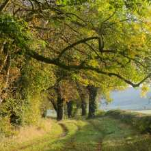 Autumn lanes, Oxfordshire