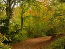 Icknield Way, Aston Rowant