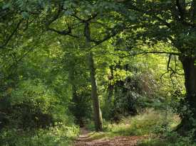 Ispden Wood, Checkendon