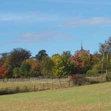 St Giles, Codicote through the trees