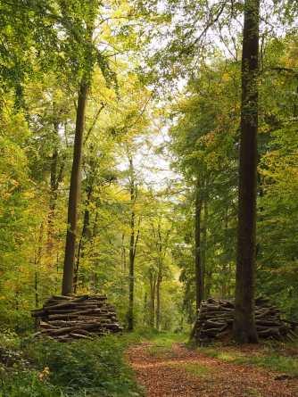 Woodland management near Hook End, Checkendon