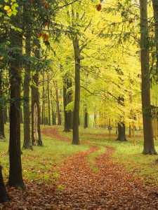 A winding path, Hambleden