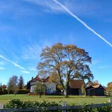 Blue skies, brown trees, Wynches, Much Hadham