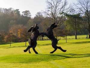 Boxing hares, Mundaydean Lane