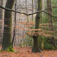 Chiltern Woods in November