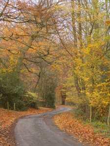 Homefield Wood, Medmenham