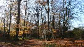 Late Autumn on Marlow Common