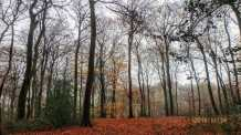 Longfield Wood, Great Kingshill