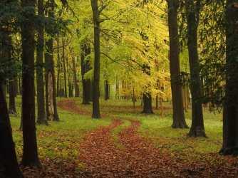 Peak Autumn