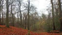 Sandwich Wood, Little Kingshill