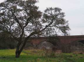 The Thames, Moulsford Viaduct