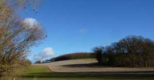 Blunts Wood, Miicklefield Green, Hertfordshire