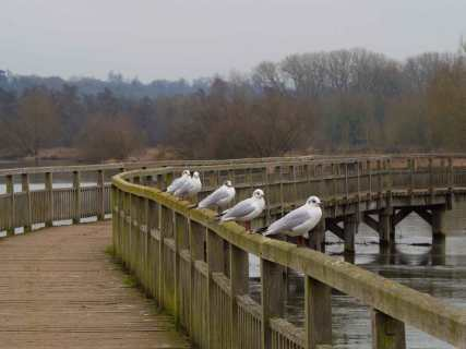 Getting your gulls in a row