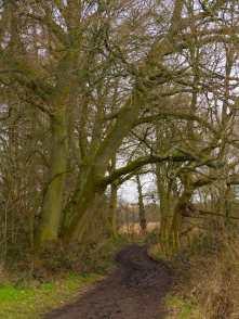 Winter's muddy paths