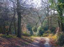 Woodland colours