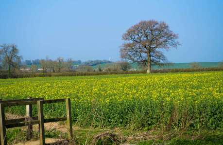 Hockliffe and spring fields