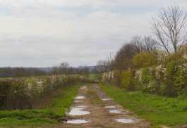 Spring hedges