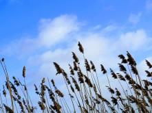 Spring skies