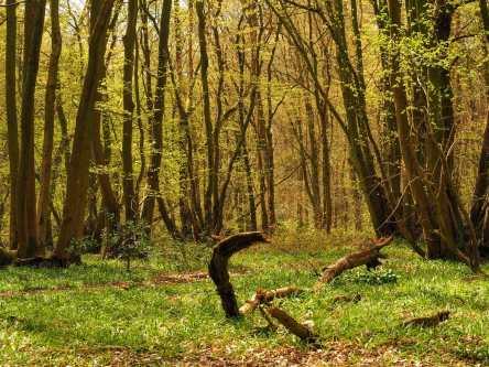 Batch Wood, Batchwood Hall