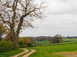 Bramville Wood, St Albans