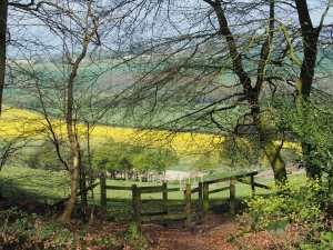 Ipsden Valley