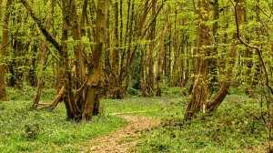 Langley Wood